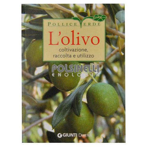 El olivo: cultivo, la recolección y el uso