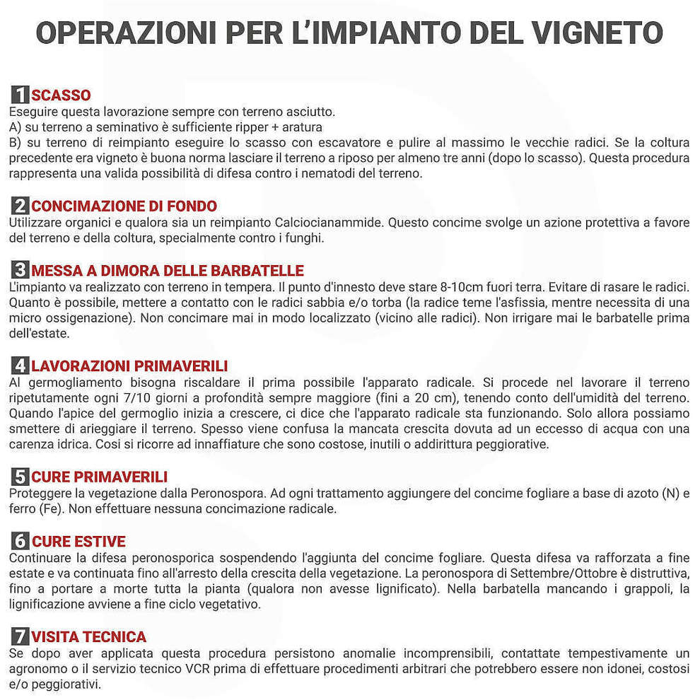 Grechetto (10 pcs)