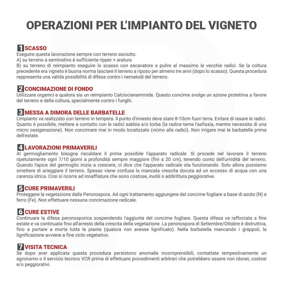 Malvasia Lazio (10 pz)